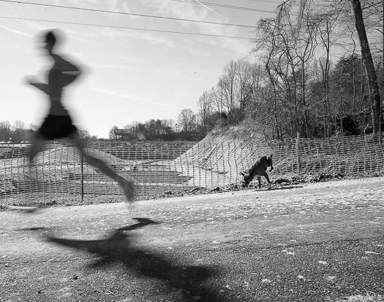 Greenway-Runner-Dog2