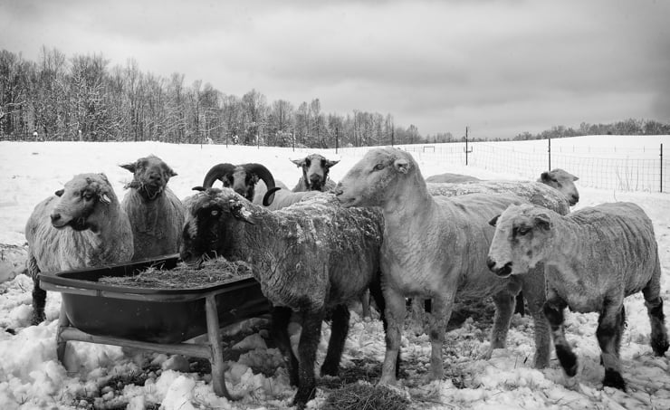 Rising_Mmeadow_Farm_Snow_0019